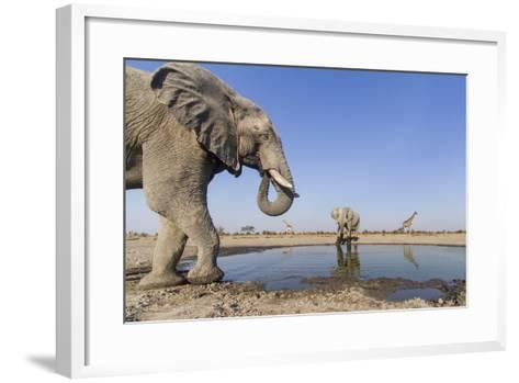 Botswana, Chobe National Park, Elephants and Giraffes at a Water Hole-Paul Souders-Framed Art Print