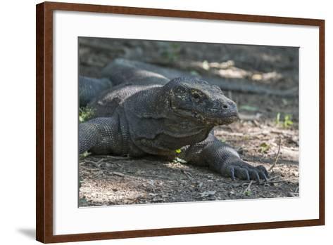 Indonesia, Komodo Island. Komodo NP, UNESCO. Famous Komodo Dragon-Cindy Miller Hopkins-Framed Art Print