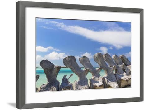 Bahamas, Exuma Island. Sperm Whale Bones on Display-Don Paulson-Framed Art Print
