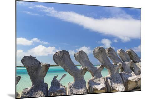 Bahamas, Exuma Island. Sperm Whale Bones on Display-Don Paulson-Mounted Photographic Print