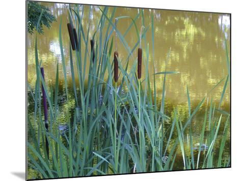 Pond-Anna Miller-Mounted Photographic Print