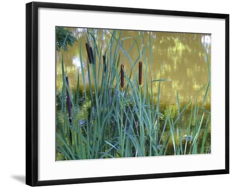 Pond-Anna Miller-Framed Art Print