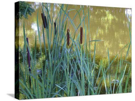 Pond-Anna Miller-Stretched Canvas Print