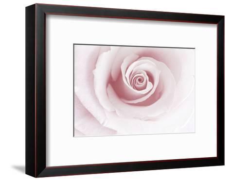 Rose Abstract-Anna Miller-Framed Art Print