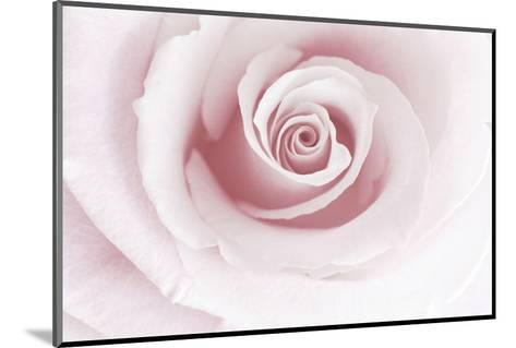 Rose Abstract-Anna Miller-Mounted Photographic Print