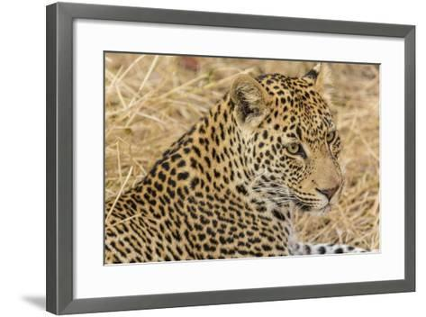 South Ngala Private Game Reserve. Close-up of Adult Leopard-Fred Lord-Framed Art Print