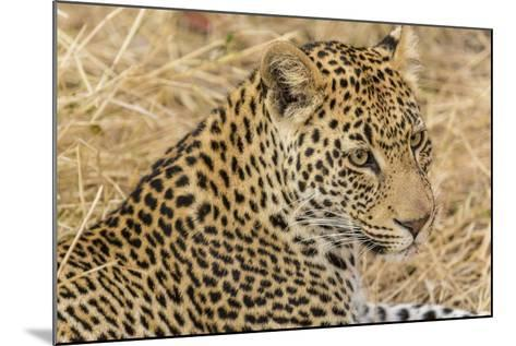 South Ngala Private Game Reserve. Close-up of Adult Leopard-Fred Lord-Mounted Photographic Print
