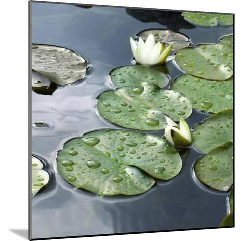 Water Lily Pond-Anna Miller-Mounted Photographic Print