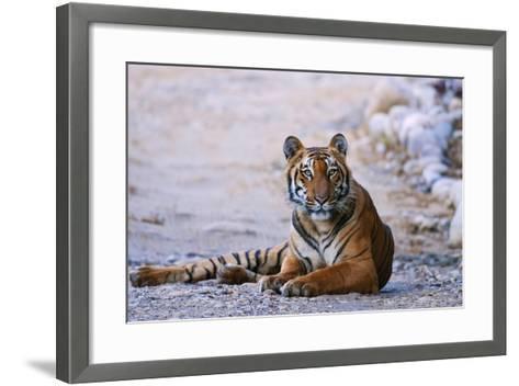 Royal Bengal Tiger by the Ramganga River, Corbett NP, India-Jagdeep Rajput-Framed Art Print