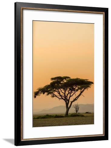 East Kenya, Amboseli NP, Sunset, Acacia Tree with Weaver Nests-Alison Jones-Framed Art Print