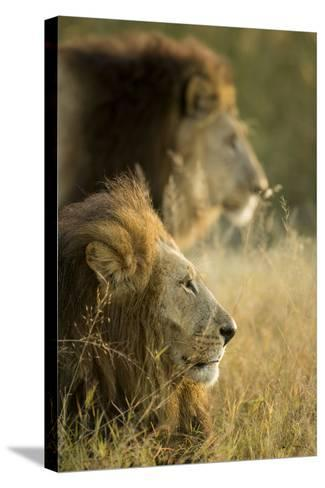 Botswana, Moremi Game Reserve, Lions in Morning Sun in Okavango Delta-Paul Souders-Stretched Canvas Print
