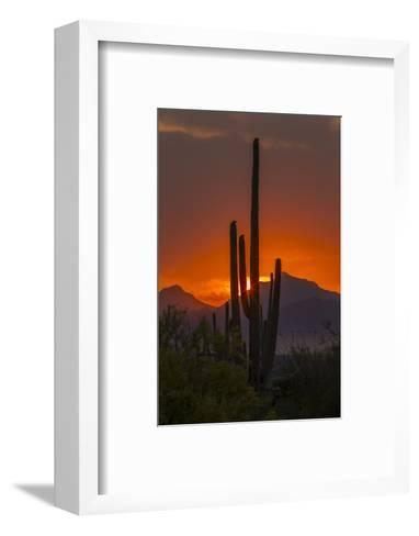 USA, Arizona, Saguaro National Park. Sunset on Desert Landscape-Cathy & Gordon Illg-Framed Art Print