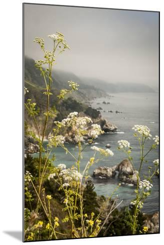 California, Big Sur, View of Pacific Ocean Coastline with Cow Parsley-Alison Jones-Mounted Photographic Print