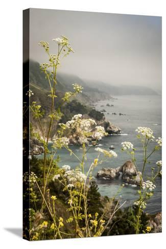 California, Big Sur, View of Pacific Ocean Coastline with Cow Parsley-Alison Jones-Stretched Canvas Print
