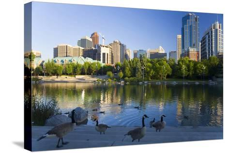 Canada Geese Resting at a Lake with Skyline, Calgary, Alberta, Canada-Peter Adams-Stretched Canvas Print