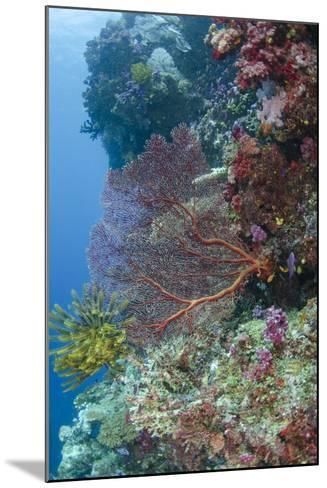 Sea Fan Gorgonian (Gorgonacea), Coral Reef, Namena Island, Fiji-Pete Oxford-Mounted Photographic Print