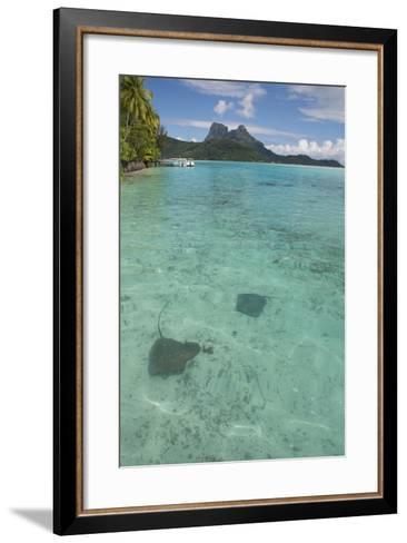 French Polynesia, Bora Bora. Haapiti. Shallow Lagoon with Stingrays-Cindy Miller Hopkins-Framed Art Print