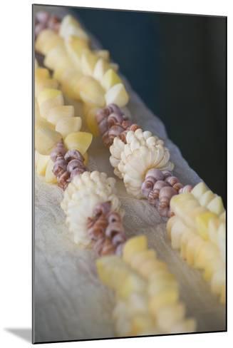 French Polynesia, Island of Mangareva, Rikitea. Mixed Seashell Lei-Cindy Miller Hopkins-Mounted Photographic Print
