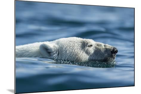 Canada, Nunavut, Repulse Bay, Polar Bear Swimming Near Harbour Islands-Paul Souders-Mounted Photographic Print