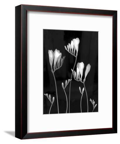 Freesia-Anna Miller-Framed Art Print