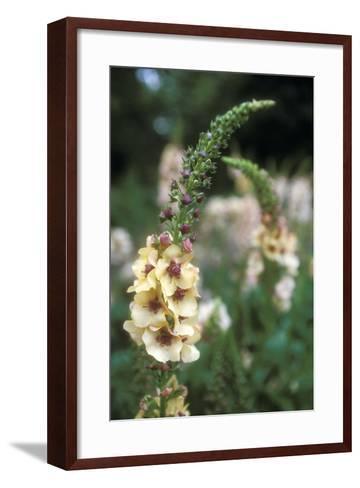 Delphinium Field-Anna Miller-Framed Art Print