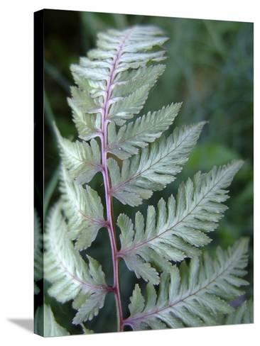 Fern Frond-Anna Miller-Stretched Canvas Print