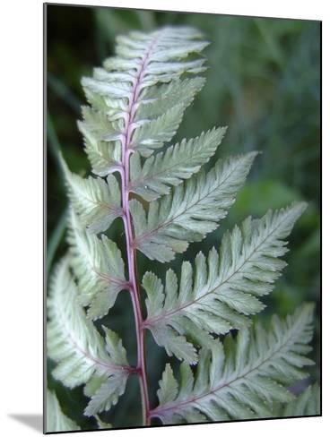 Fern Frond-Anna Miller-Mounted Photographic Print