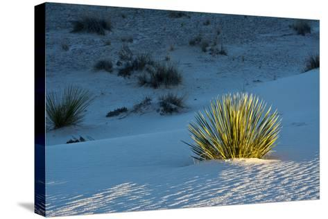Sand Patterns, Yucca, White Sands Nm, Alamogordo, New Mexico-Michel Hersen-Stretched Canvas Print