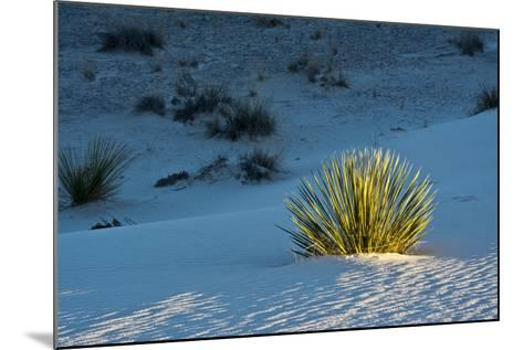 Sand Patterns, Yucca, White Sands Nm, Alamogordo, New Mexico-Michel Hersen-Mounted Photographic Print