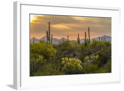 USA, Arizona, Saguaro National Park. Desert Landscape-Cathy & Gordon Illg-Framed Art Print