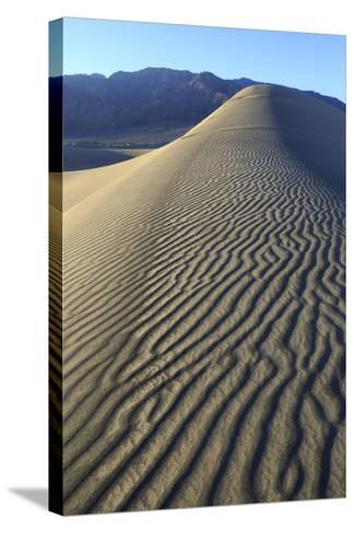 Patterns Along the Sand Dunes, Mesquite Dunes, Death Valley NP-James White-Stretched Canvas Print