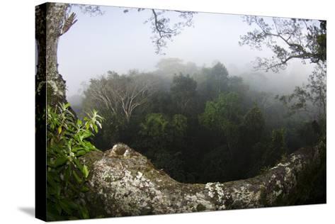 Rainforest Canopy. Yasuni NP, Amazon Rainforest, Ecuador-Pete Oxford-Stretched Canvas Print