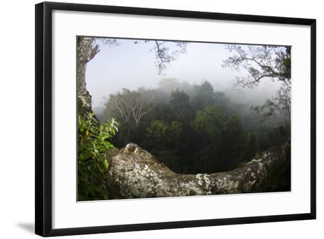 Rainforest Canopy. Yasuni NP, Amazon Rainforest, Ecuador-Pete Oxford-Framed Art Print