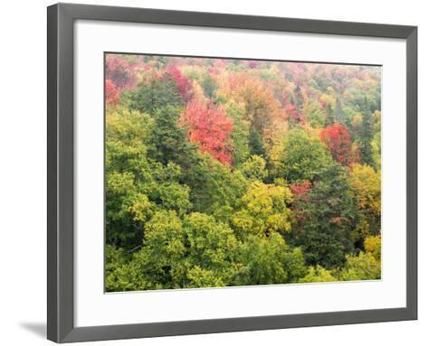 Michigan, Upper Peninsula. Colorful Autumn Tree Scenic-Julie Eggers-Framed Art Print