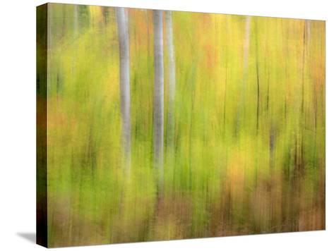 Michigan, Upper Peninsula. a Panned Motion Blur of Autumn Woodland-Julie Eggers-Stretched Canvas Print
