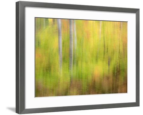 Michigan, Upper Peninsula. a Panned Motion Blur of Autumn Woodland-Julie Eggers-Framed Art Print