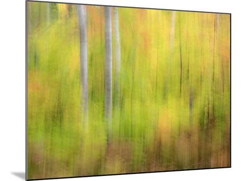 Michigan, Upper Peninsula. a Panned Motion Blur of Autumn Woodland-Julie Eggers-Mounted Photographic Print