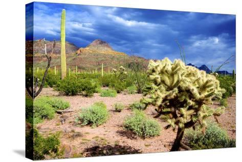 Organ Pipe Cactus NM, Saguaro and Cholla Cactus in the Ajo Mountains-Richard Wright-Stretched Canvas Print
