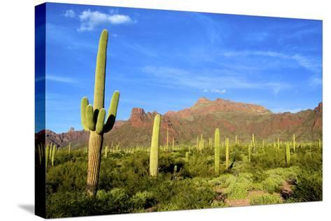 Organ Pipe Cactus National Monument, Ajo Mountain Drive in the Desert-Richard Wright-Stretched Canvas Print