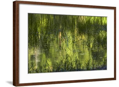 Reflections in Mirror Lake, Yosemite National Park, California, Usa-David Wall-Framed Art Print