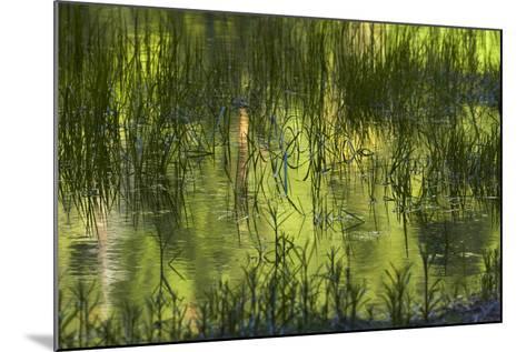 Reflections in Mirror Lake, Yosemite National Park, California, Usa-David Wall-Mounted Photographic Print