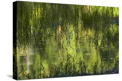 Reflections in Mirror Lake, Yosemite National Park, California, Usa-David Wall-Stretched Canvas Print