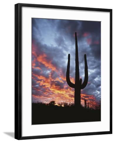 Arizona, Organ Pipe Cactus National Monument, Saguaro Cacti at Sunset-Christopher Talbot Frank-Framed Art Print