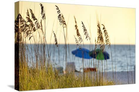 A Day at the Beach Is Seen Through the Sea Oats, West Coast, Florida-Sheila Haddad-Stretched Canvas Print
