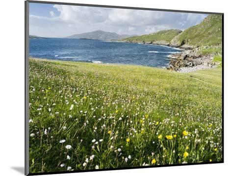 Coastal Wildflowers, Huisinis, Machair. Isle of Harris, Scotland-Martin Zwick-Mounted Photographic Print