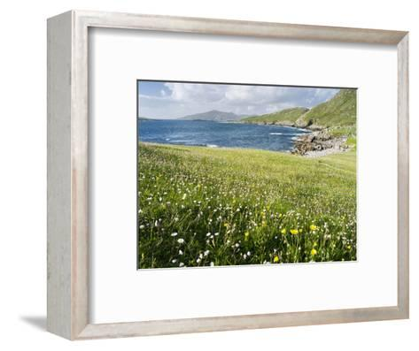 Coastal Wildflowers, Huisinis, Machair. Isle of Harris, Scotland-Martin Zwick-Framed Art Print