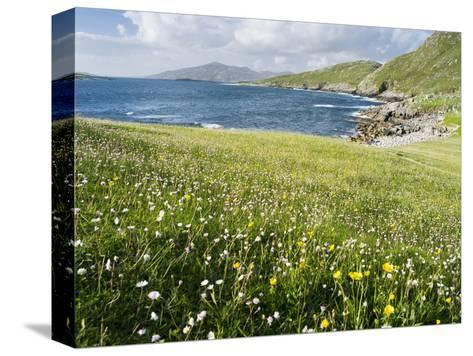 Coastal Wildflowers, Huisinis, Machair. Isle of Harris, Scotland-Martin Zwick-Stretched Canvas Print