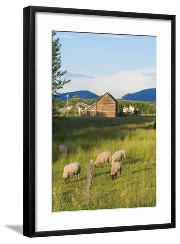 Bozeman, Montana, View of Sheep and Barn in Beautiful Green Fields-Bill Bachmann-Framed Art Print