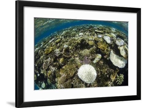 Coral Reef Diversity, Fiji-Pete Oxford-Framed Art Print