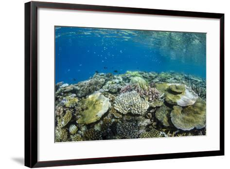Coral Reef Diversity, Fiji-Pete Oxford-Framed Art Print